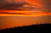 Saguaro cactus silhouetted against red orange clouds, Reddington Pass, Arizona.©1990 Edward McCain. All rights reserved. McCain Photography, McCain Creative, Inc.