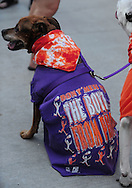May 29, 2010; Phoenix, AZ, USA; Ginger the dog wears Phoenix Suns attire prior to game six of the western conference finals in the 2010 NBA Playoffs at US Airways Center.  Mandatory Credit: Jennifer Stewart-US PRESSWIRE