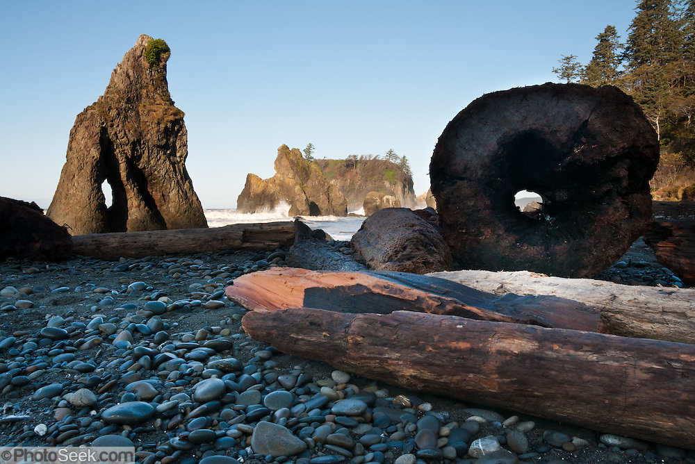 Sea stacks, surf, driftwood, coastal forest at Ruby Beach, Olympic National Park, Washington, USA