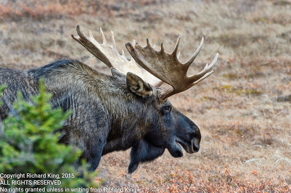 Photographs of the landscapes and wildlife Anchorage and Chugach State Park, Alaska, USA