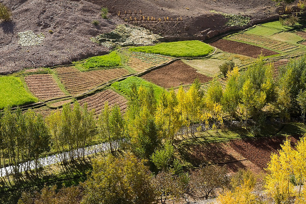 Small cultivated fields along a river near Amezri in the lush Tessaout Valley, M'Goun Massif, Central High Atlas, Morocco.