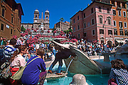 ITALY, ROME Piazza di Spagna or Spanish Steps completed in 1726; Baroque style, lined with azaleas, and Church of Trinita Dei Monte at top