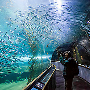 Underground tunnel that lets sea life swim around you at the Aquarium of the Bay in San Francisco.
