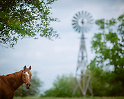 A horse looks at the cameraman. <br />
