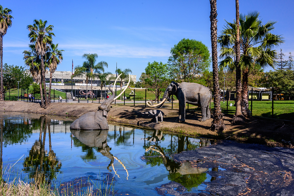 La Brea Tar Pits and Museum, Los Angeles, California