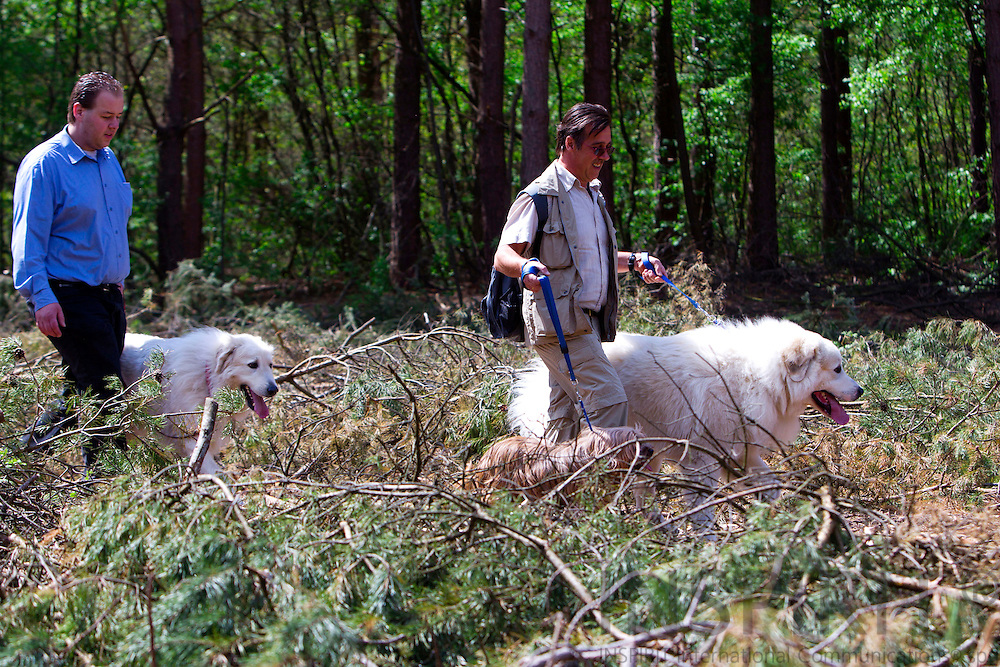 EKSEL - BELGIUM - 12 APRIL 2010 -- Pyreneese Berghond wandeling, Chien de Montagne des Pyrénées promenade, Pyrenean Mountain Dog walk in Eksel. PHOTO: ERIK LUNTANG / INSPIRIT Photo..