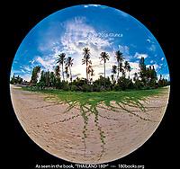 Morning Glory Vines on Thung Wua Laen Beach, Chumphon, Thailand