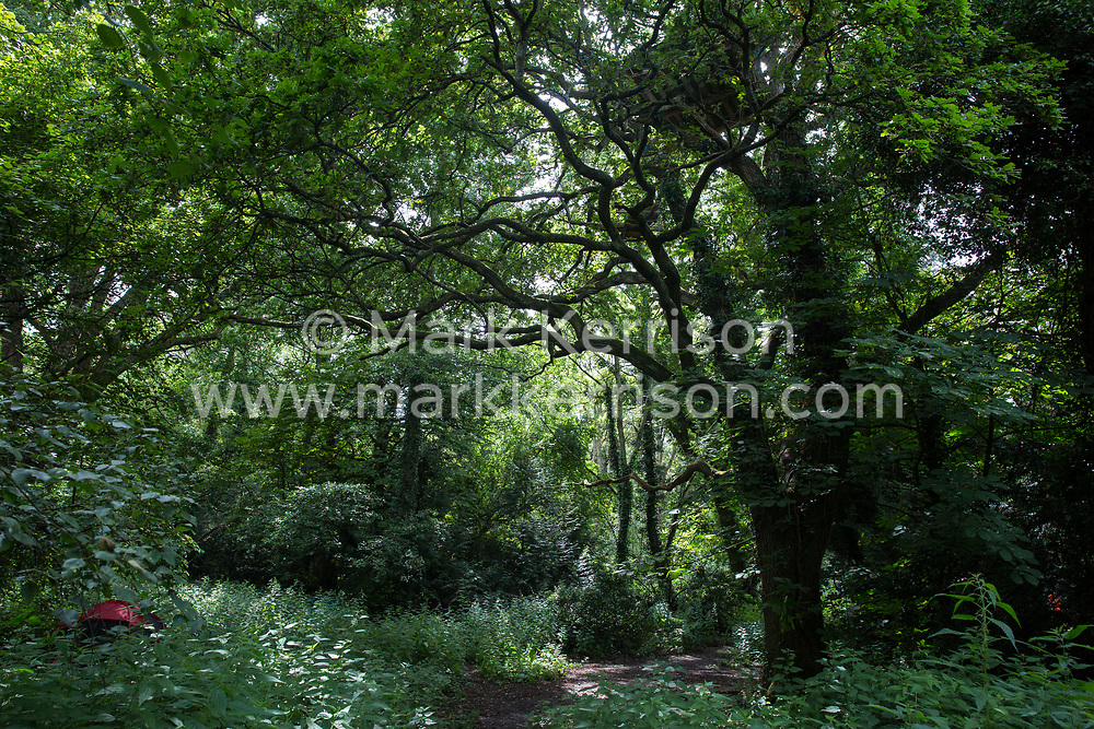 Denham, UK. 13 July, 2020. Woodland in Denham Country Park which is expected to be destroyed for the HS2 high-speed rail project. Environmental activists from HS2 Rebellion have created a camp and tree houses in order to try to prevent the felling of trees for the £106bn project which will remain a net contributor to CO2 emissions during its projected 120-year lifetime.