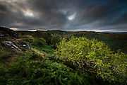 August on Dartmoor. After months of earth-scorching summer the elements during our three day trip to this magical national park in the South West turned out to be mixed to say the least. Brooding clouds hovered over dark hillsides and the sun glowed rather than shone, through thin patches of grey blanket overhead. <br /> <br /> I was taken aback by how lush the valleys were, so much more tree cover than here in North Wales. The variation in the vegetation was also surprising, creating quite a tapestry of earthy greens and browns. Of course, the most exciting aspect of this landscape for me, is the granite beneath, sometimes punching upwards as huge sculptural tors, monuments amidst acres of silent grasses and foliage. I find Dartmoor uniquely spiritual, enchanting even and I can&rsquo;g wait to return.