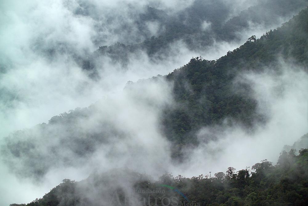 El Parque Internacional La Amistad (tambi&eacute;n llamado PILA), es un parque transfronterizo, fue creado por los gobiernos de Costa Rica (PILA-Costa Rica) y Panam&aacute; (PILA-Panam&aacute;) al reunir la Reserva de la cordillera de Talamanca y el Parque Nacional La Amistad, respectivamente, en una sola entidad donde la direcci&oacute;n es compartida entre las dos naciones.<br /> <br />  El parque fue declarado Patrimonio de la Humanidad por la UNESCO en el a&ntilde;o 1983, y declarado Parque Internacional de la Paz, al seguir la recomendaci&oacute;n de la Unesco del a&ntilde;o 1988.<br /> <br /> Tiene una superficie de 401.000 ha, en Costa Rica existen (193.929 ha), en las provincias de San Jos&eacute;, Cartago, Lim&oacute;n y Puntarenas, siendo sumamente inaccesible , la parte de Panama (207.000 ha) es de dif&iacute;cil acceso, teniendo gran parte del parque a&uacute;n sin explorar, abarcando las provincias de Bocas del Toro y Chiriqu&iacute;.<br /> <br /> Est&aacute; compuesto en su mayor parte de pluvisilva, recoge la zona de la cordillera de Talamanca, donde se encuentran las cimas m&aacute;s altas de los dos pa&iacute;ses.<br /> <br /> Se han encontrado algunas especies de mam&iacute;feros como: jaguar, el puma, el ocelote, el pizote, el za&iacute;no, el tapir, el perezoso de tres dedos, monos ardilla, los monos aulladores, Panam&aacute; se han identificado 550 especies, que representan el casi el 50% de las 986 especies de aves registradas para el pa&iacute;s. <br /> <br /> Por su parte en Costa Rica se han reportado unas 450 especies lo que representa el 51% de las 845 especies de Costa Rica . Destacan el trepatroncos alicasta&ntilde;o, el colibr&iacute; gorgiblanco, el quetzal, la pava negra, el pav&oacute;n, el &aacute;guila harp&iacute;a, las guacamayas y otras especies.<br /> <br /> &copy;Alejandro Balaguer/Fundaci&oacute;n Albatros Media.