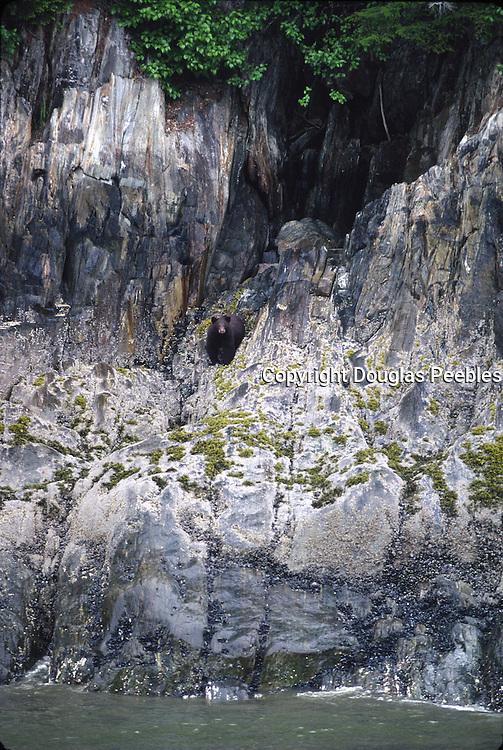 Bear, Inside Passage, Alaska, USA<br />