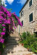 Stairs and flowers, Ston, Dalmatian Coast, Croatia