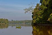Dense vegetation along the banks of Kinabatangan River, Sabah, Borneo.