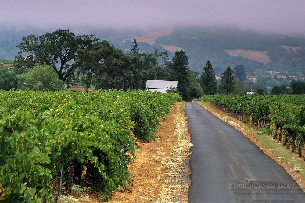 Vineyard & driveway, Dutcher Creek Road, near Cloverdale, Sonoma County, California