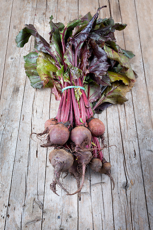 Fresh organic beets just picked from the garden shot on a wood table.Bunch of raw beetroots just picked from the garden, shot on wood background.
