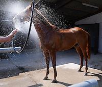 Reiten  03.07.2015 Tuebinger Landeschampionat 2015 Grosser Preis der Stadt Tuebingen Abkuehlung fuer Pferd Desperanco
