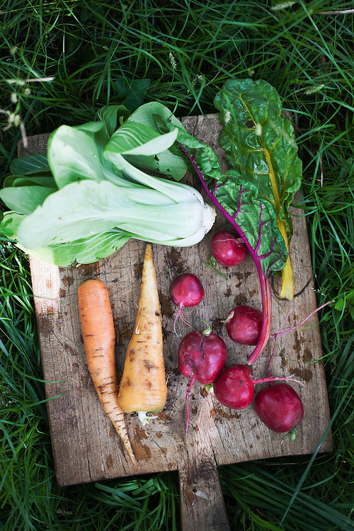 Garden-Picked Vegetables.  Around the Southern Table Cookbook by Rebecca Lang