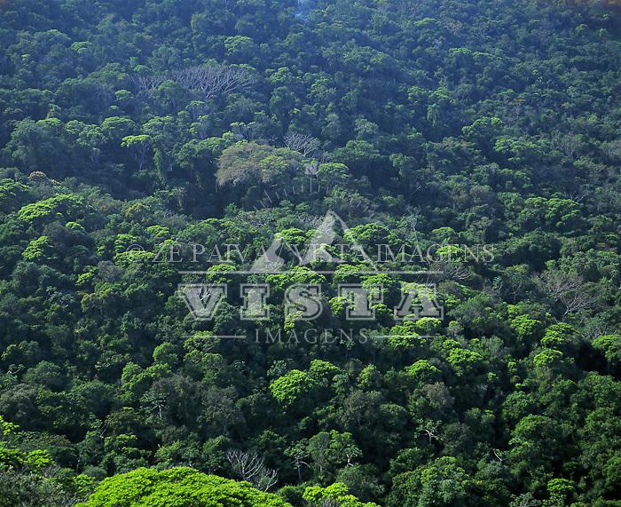 Floresta na Unidade de Conservacao Ambiental Desterro, Florianopolis, Santa Catarina, Brasil. Foto de Ze Paiva/Vista Imagens