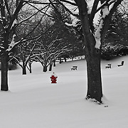 &quot;Little Red&quot; 2 SC<br /> <br /> A wonderful bright red fire hydrant shines in this beautiful snowy winter scene done in black and white with selective red on the fire hydrant!!<br /> <br /> Winter in Michigan by Rachel Cohen Winter in Michigan!<br /> <br /> Beautiful winter scenes, winter wonderlands, and lone trees in winter!<br /> <br /> Images in color, B&amp;W, and using selective color.<br /> <br /> If you love winter, snow, trees, rolling hills, and lone trees then you'll find a lovely selection!! <br /> <br /> Winter in Michigan by Rachel Cohen