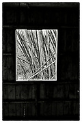 """An interior view from within an abandoned Monk's meditation hut set within a dense bamboo forest, in the grounds of the Pha Koeng Buddhist temple, Chaiyaphum Province, Northeast Thailand, 2014. From the series: Pha Koeng"""" (2011-2017)."""