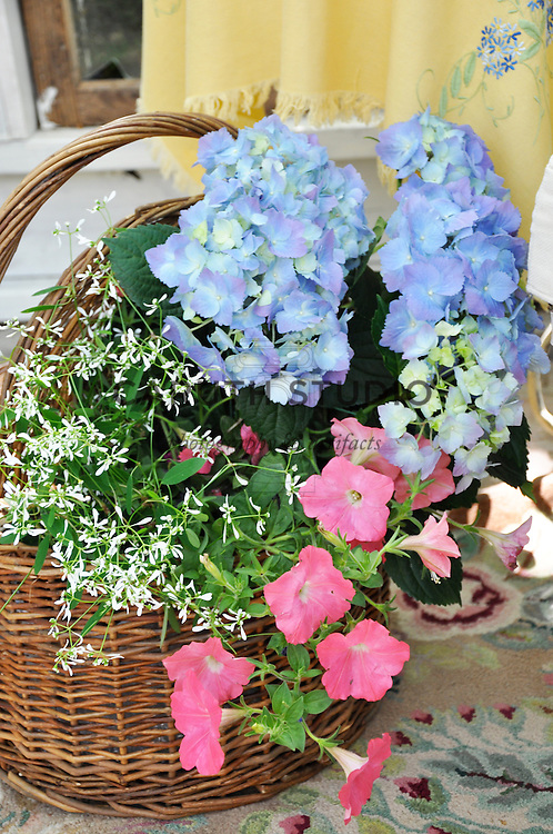 Vintage garden: Basket of flowering plants inside glass shed