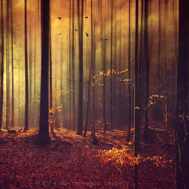 Forest in sunrise backlight on a winter morning - manipulated photograph