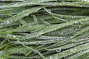 Frozen raindrops grass
