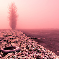 Trees in fog at Eye WWII disused runway in Suffolk England with rubber trye on grass verge