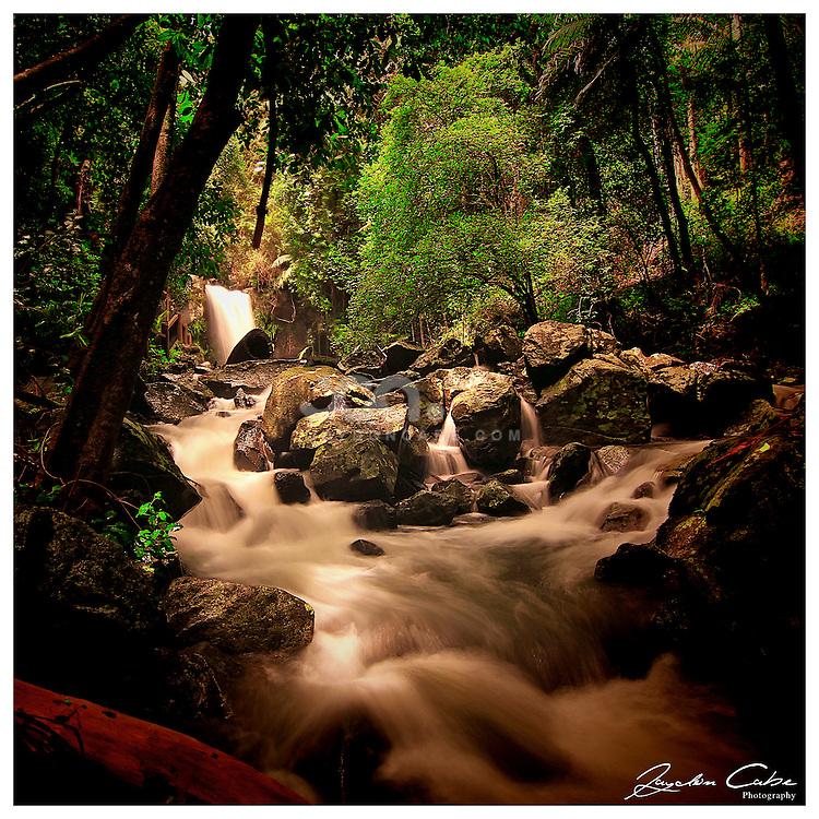 Nature Photos by Jaydon Cabe - Curtis Falls Mt Taborine