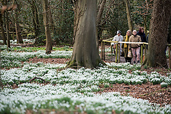 © Licensed to London News Pictures. 11/02/2018. Welford, UK. Members of the public walk through a white carpet of snowdrops in the woods at Welford Park near Newbury. Welford Park, where The Great British Bake Off is filmed every summer, is only open for visitors for five weeks in the year - until March 5th. Photo credit: Ben Cawthra/LNP