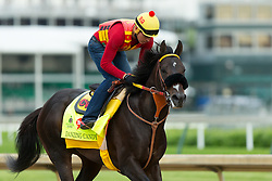 Derby 142 hopeful Danzing Candy with Rolando Quinones up were on the track for training, Wednesday, May 04, 2016 at Churchill Downs in Louisville.