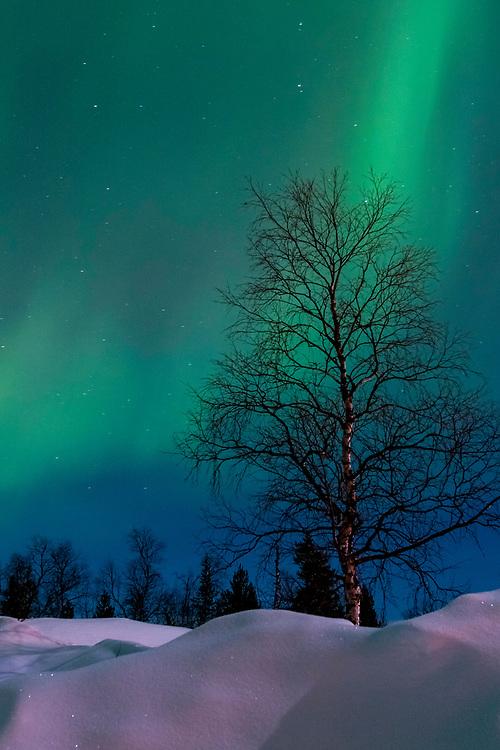 Aurora borealis, Kaamanen, Finland