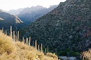 Morning light penetrating into Sabino Canyon Recreation Area and the Santa Catalina Mountains, Coronado National Forest, Arizona. Saguaro cacti highlight the Sonoran Desert.