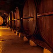 South America, Uruguay; Canelones. Fine wine ages in huge oaken casks in a cool wine cellar