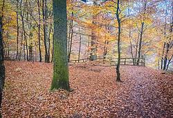 Loch Fiskally Autumnal Colours.<br /> Neil Bain   EEm 4th November 2017.