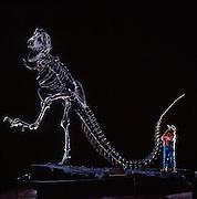 As Bob Bakker's warm-blooded theory heated up and gathered the support of the scientific community, museums around the world responded by mounting their dinosaurs in more active poses.