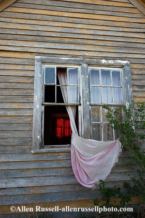Deserted house, curtains, rosebush, Sidney, Montana