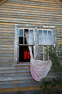 Deserted house, curtains, rosebush, Sidney, Montana