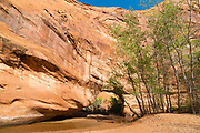 Coyote Bridge is an eroded hole through sandstone along Coyote Creek, Coyote Gulch, Grand Staircase-Escalante National Monument, Utah.
