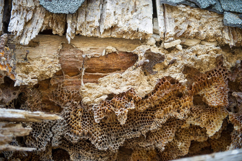 Bee hive on old building in Burkittsville, Maryland