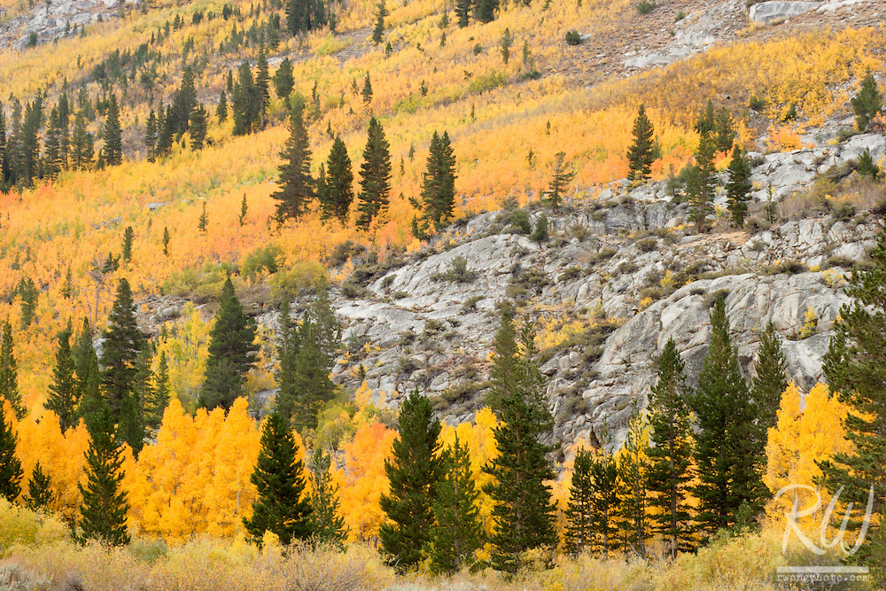 South Fork Bishop Creek Canyon Fall Color, Inyo National Forest, California