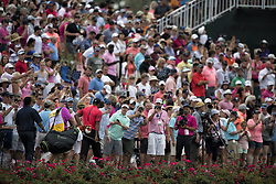May 13, 2018 - Ponte Vedra Beach, FL, USA - The Players Championship 2018 at TPC Sawgrass..Tiger Woods, all eyes on him, walks to #17 green (Credit Image: © Bill Frakes via ZUMA Wire)