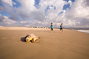 A dead Loggerhead sea turtle (Caretta caretta), washed up on a Mediterranean beach. Photographed in Israel in April