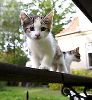 Close-up of little cat