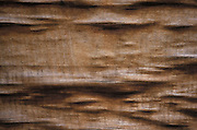 abstract photo of wood grain
