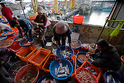 Fishmongers sort fish and other varieties of sea-food at the Daxi Port in Taiwan.