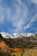 Perfect stands of Aspen provide falls colors above North Lake, Inyo National Forest