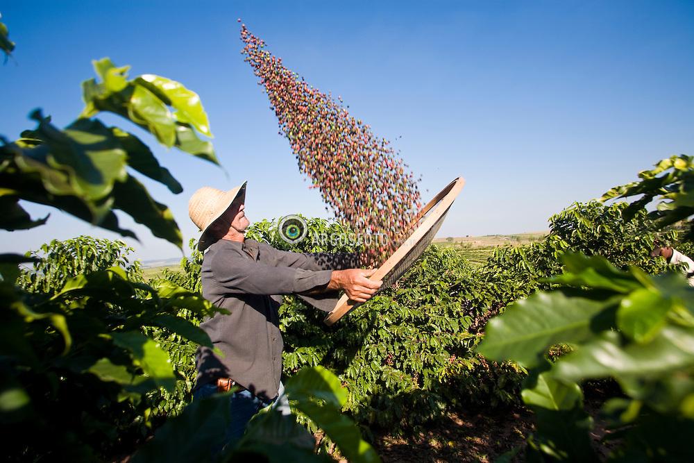 A rural worker selects arabic coffee beans at a farm in Galia, in the state of Sao Paulo, Brazil / Trabalhador rural peneirando cafe arabica em fazenda no interior de Sao Paulo.