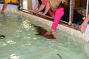 "Freshwater Farms of Ohio ""Sturgeon Petting Zoo"" in Urbana, Ohio."