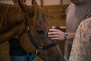 Veteran Michael Scarberry connects with a horse after a ride at the Ohio University Southern Ohio Horse Park Center for Therapeutic Riding.